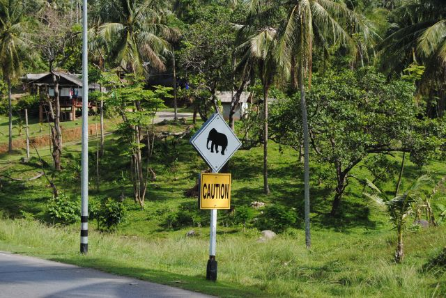 """""""Elephant Crossing"""" Yeah, seriously."""
