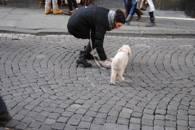 Me Picking Up Dog Shit In Florence. Thanks A lot Oliver.