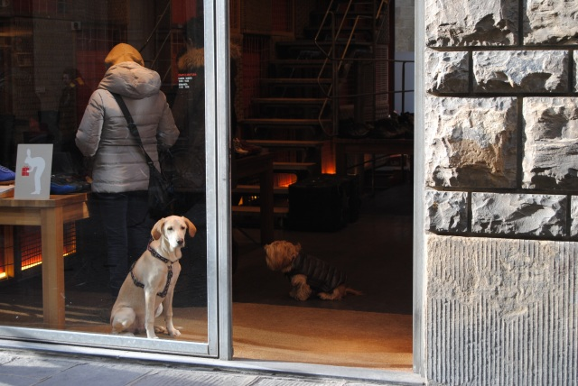 Dogs In Stores In Florence Shopping