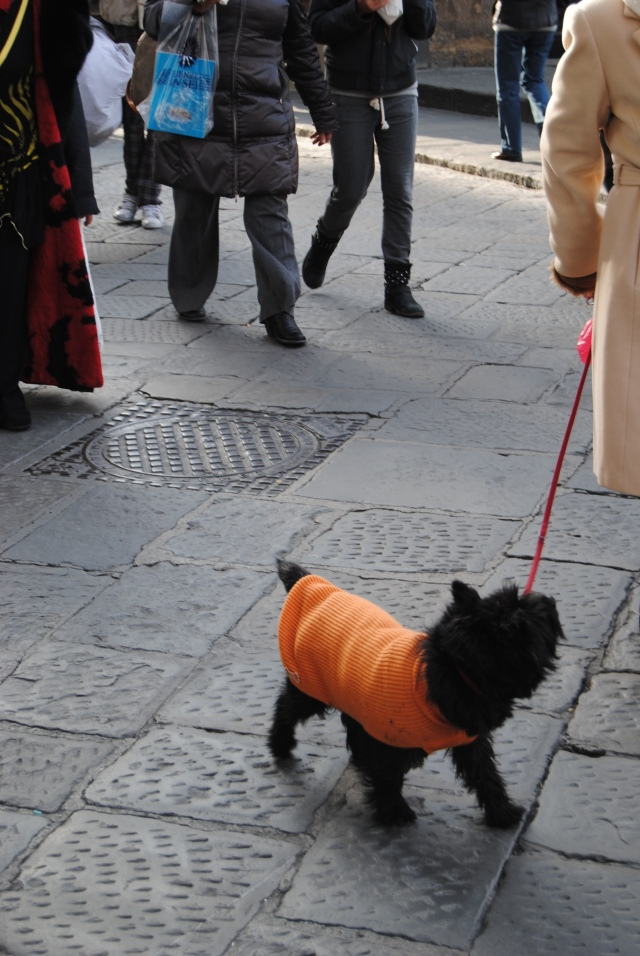 Amazing Florentine Woman And Her Dog In Florence