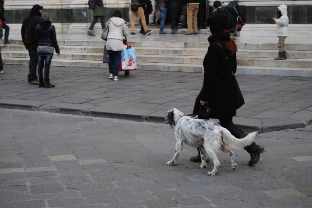 Dogs In Italy Taking A Stroll Through The City Center